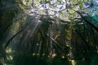 Mangrove light - jcg © 2012