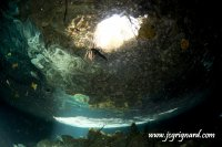 Cenote Cat fish - jcg © 2012