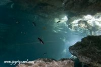 Cenote, poisson-chat - jcg © 2012