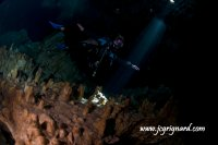 Fly in the cenote laser light - jcg © 2012