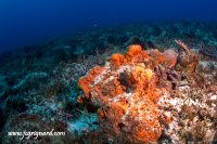 The reef of Tortugas - jcg © 2012